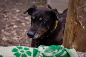 dog dog shelter