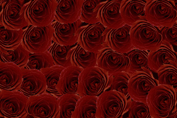 Maroon red roses bouquet as frame on white background
