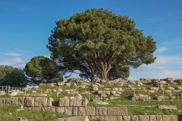 Altar of Zeus remains