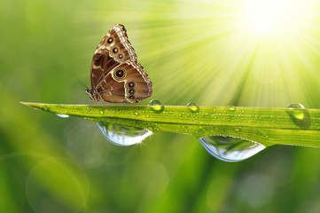 Fresh green grass with dew drops and butterfly