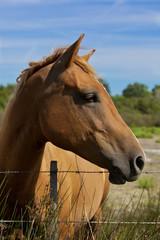 Cavalli Camargue 3