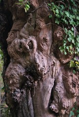 albero tormentato