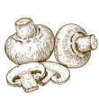 engraving illustration of champignons - 77622411