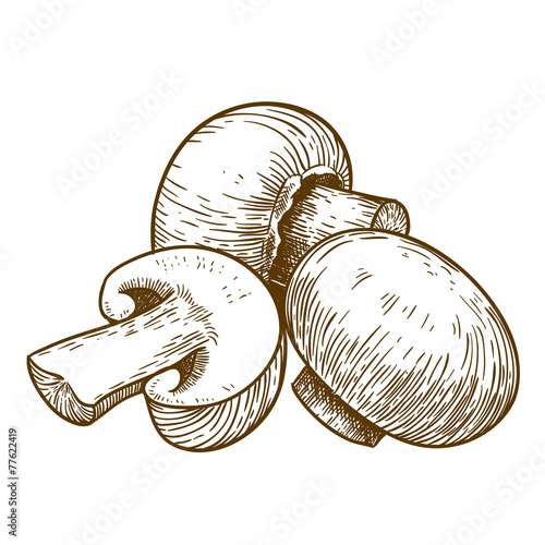engraving illustration of tree mushrooms champignons - 77622419