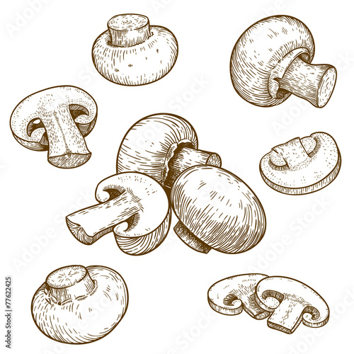engraving illustration of mushrooms champignons - 77622425