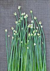 fresh Onion Flower Stem on black mat
