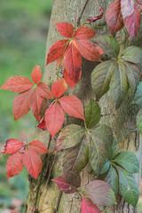 Fall at Monza Park