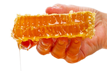 Hand with a piece of honey comb