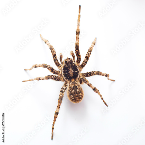 Leinwanddruck Bild spider isolated