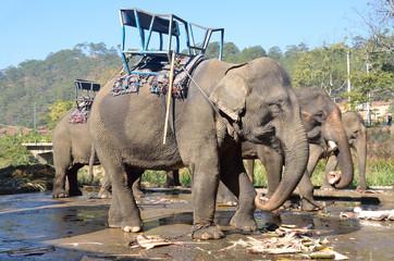 Слоны в парке при водопаде Прен в Далате, Вьетнам