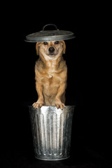 trash dog