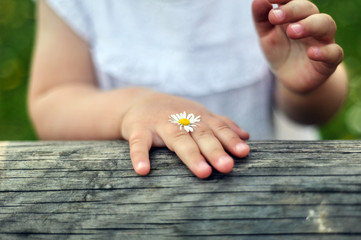gänseblümchen mit kind