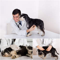 Veterinary care collection