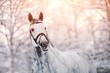 Leinwandbild Motiv Portrait of a gray sports horse in the winter