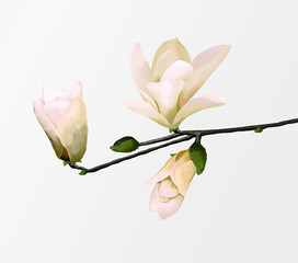 magnolia on  branch