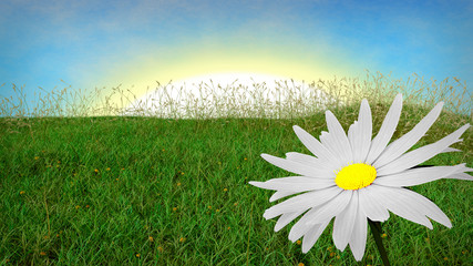 spring background with grass and aster