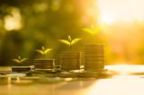Money growing concept - 77649449