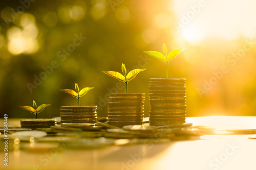 Fototapeta Money growing concept