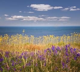 Wildflowers and ocean