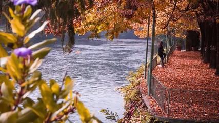 autunno caduta foglie video