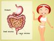 Постер, плакат: intestine