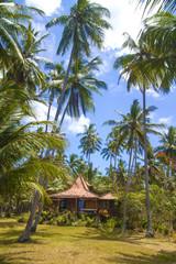 Tropical palms.