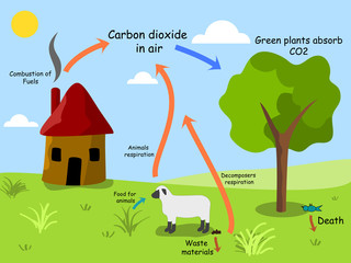 Carbon dioxide cycle