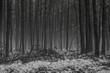 Wald in Winter