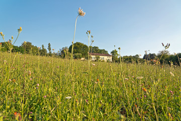 Green Grasses on the Ground Under Light Blue Sky