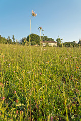 Green Grasses Growing on the Ground Under Blue Sky
