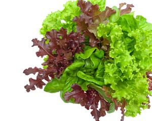 fresh lettuce leaves of different types isolated on a white back
