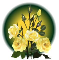 yellow roses on dark circle background