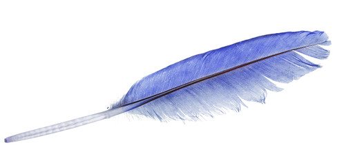 light blue straight feather on white
