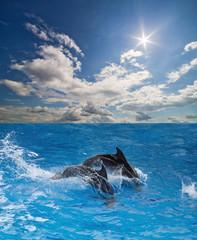grey dolphins in blue water under sun