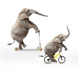 Two  elephant's friends having a fun.