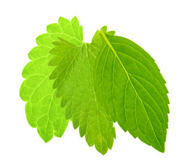 three isolated green mint leaves