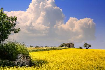 PAESAGGIO PRIMAVERILE.Campo di fiori.ITALIA(Puglia)