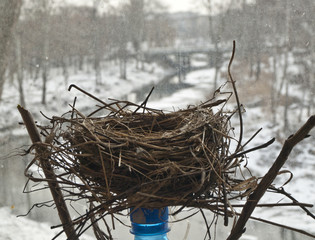 Bird's nest on a window sill.