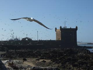 Gaviotas en el puerto de Essaoiura