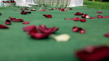 rose petals on the Bridal path