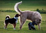 Several dogs meet in a park