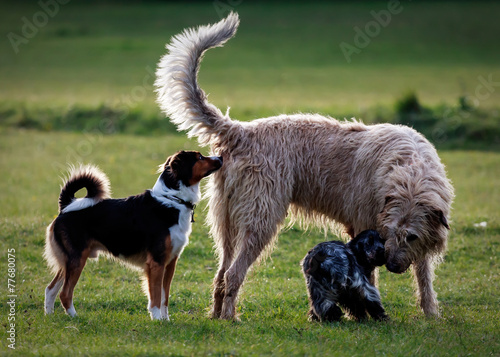 Foto op Plexiglas Ezel Several dogs meet in a park