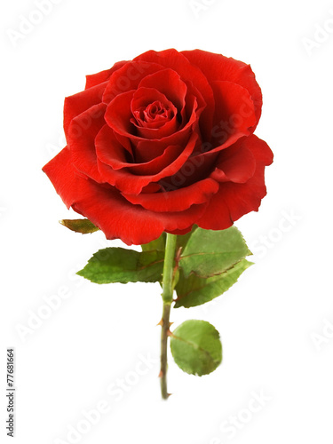 Fotobehang Rozen Red rose with leaves isolated on white