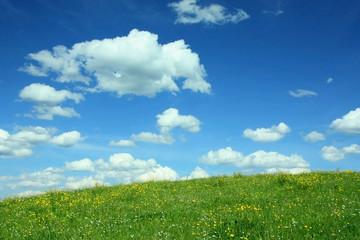 Landschaftshintergrund mit Butterblumenwiese und Wolkenhimmel
