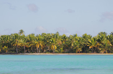 Coast of tropical island. Isla Saona, Dominicana