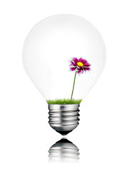 Light Bulb with Little Purple Wildflower Growing Inside Isolated