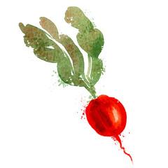 radish vector logo design template. vegetables or food icon.