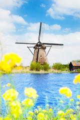 Old windmill in Kinderdijk at spring