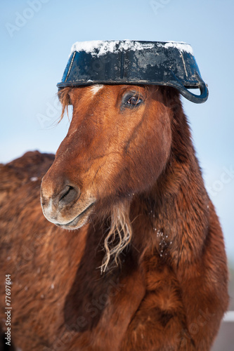 Funny horse with rubber feeding bucket on its head - 77697604