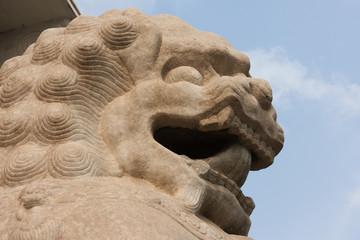 Close up of Lion, Symbol of Power